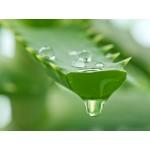 Maui Bambus gusta i obnovljena kosa regenerator bez silikona za omekšavanje i jačanje suve, lomljive dlake kose 385ml