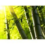 OGX Bamboo sprej punoća vlakana za jačanje kose iz korena 177ml